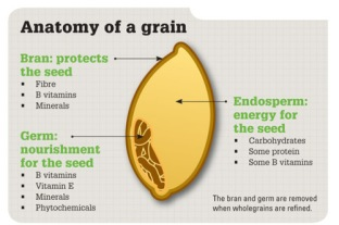 Anatomy-of-a-Wheat-Berry